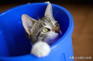 猫咪总爱去捣鼓垃圾桶怎么办?做好这5点即可,让猫咪束手无策