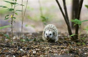 在人口超过2100万的北京,野生动物如何在人群中穿梭?