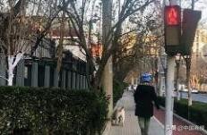"""云南威信""""禁止遛狗第三次直接捕杀""""城市规范养犬困境何解"""