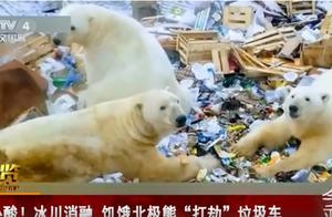 """北极熊""""洗劫""""垃圾车,从中看到人类未来的样子"""