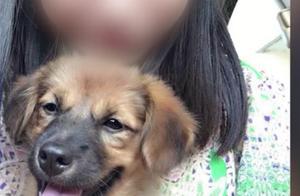泪目!上海焚妻案爱犬曾为救主人冲入火海!