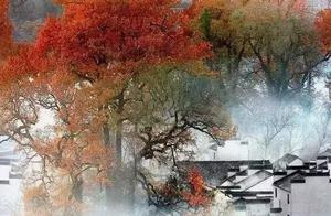 深秋来袭,天气渐冷,婺源的枫叶也被一点点染红