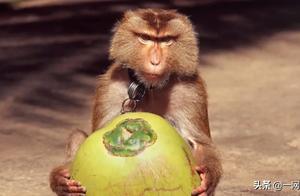 """使用童工固然不行,用""""猴工""""呢?超市椰子产品下架"""