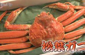 16万一只的松叶蟹为啥这么贵?怎么做才好吃?