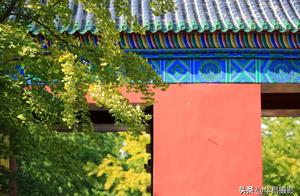 北京:地坛银杏,红墙金叶醉美景