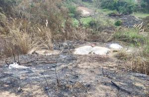 扫墓引发山火 男子被拘10天