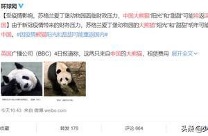 英国考虑将大熊猫送回中国:国宝被嫌弃,还是被吃穷了?