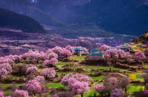 西藏的春天来了,尤其在三四月份真的很美
