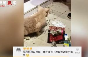 宠物猫抓到4只老鼠上了热搜,网友点赞:这年头懂业务的猫太少了
