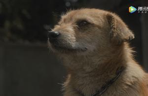 隐秘而伟大动物细节:小黄狗代表顾耀东及其处境,猫咪隐喻沈青禾