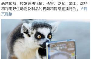 市场监管总局:严肃查处直播吃野生动物行为