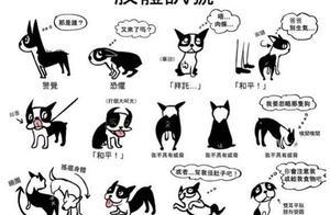 """狗狗肢体语言大揭秘:""""舔狗""""行为只是因为爱你?还有这些原因"""