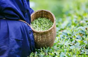 第11届成都采茶节来了!西藏林芝桃花节时间曝光
