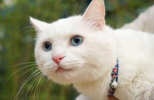 原来猫咪的毛色会影响性格!难怪大橘那么受欢迎