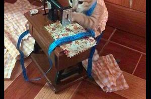 猫咪跑到缝纫机旁边,有模有样的干起活来,猫:努力挣猫粮的一天