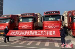 武汉10台冷链车今出发,将接运蒙古国捐赠首批1.2万只羊