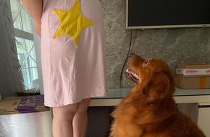 暖化了!主人怀孕后要出门,狗狗超紧张,它担忧主人的表情太可爱