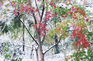 杭州下雪了