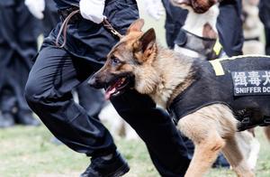 致敬这6种胜任缉毒犬的狗狗!它们可爱可敬