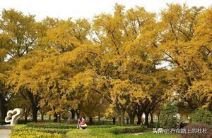 江苏十大最美赏秋地,色彩斑斓秋色惹人醉,美得正当时