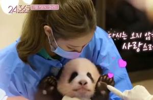 BLACKPINK带妆接触熊猫幼崽,韩国综艺为收视再触底线