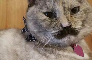 神似卓别林的猫?!这猫是想长在别人的笑点上吗?