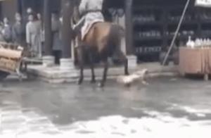 网曝某剧组拍戏让马踢狗,回应:狗并未被踢到