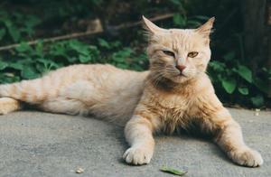 收养一只流浪猫是怎样的体验?铲屎官:乖巧懂事会撒娇,像只假猫