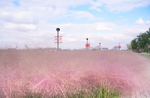 宁波这座公园种满网红植物,被游客随意践踏,保安:罚不得抓不得