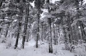 刷屏了!当西安邂逅初雪