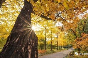 每年必看的北京赏银杏地图,今年PO出了最全的!有些就在家门口