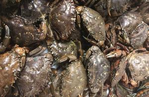 澳洲螃蟹泛滥,政府急需吃货:不限量,随便抓