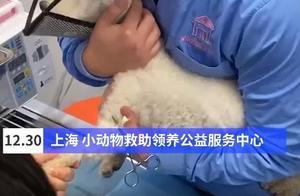 上海做出个第一:全国各地的铲屎官们发来贺电!