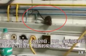 医院ICU一群老鼠满地跑,还咬氧气管!医护人员告知患者:适应一下
