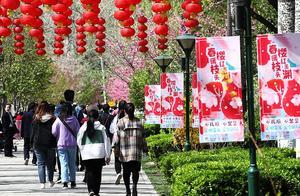 同比2020年增长四倍!北京清明假期接待游客608.7万人次