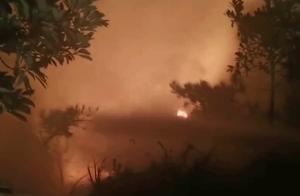 广东南澳山火已基本可控 无人员伤亡