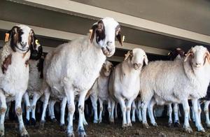 """羊羊羊终于到武汉了!这趟""""中国行""""历程笔记来了→"""