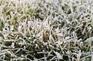 -0.3℃!海南迎十年来最低气温 树木草丛结霜
