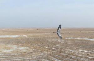 黑龙江七星河国家级自然保护区加强管理保护 迎候鸟回归