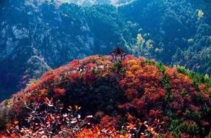 霜叶红于二月花,周末来泰安这些地方赏红叶吧!