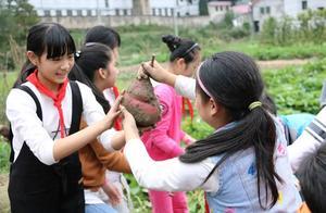 浦江县檀溪镇中心小学播报丨挖薯割稻秋收忙 户外课堂助成长