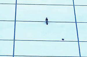 啄木鸟在海淀一写字楼外墙安家 半小时内把外墙啄出两个洞