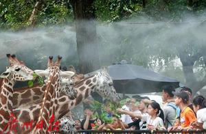 """广州动物园大升级:不再""""饭来张口"""",动物活得更""""潇洒"""""""