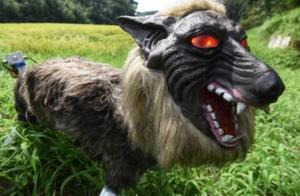 日本研发出机器狼守护庄稼,长相狰狞,能轻易吓退各种野兽