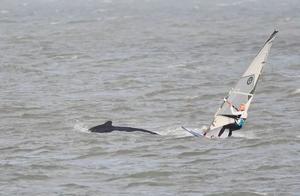 谁这么抢眼?和鲸鱼共舞