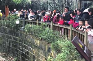 """女童不慎坠入大熊猫活动区获救,坠落点旁边就是""""禁止翻越""""警示牌"""