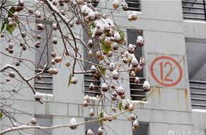 走进河南高校校园雪景,遇见最美古诗词……