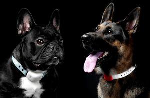 宠物监视器,有效保障宠物生命