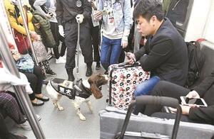 """广州警方全国首创""""警犬上地铁列车安检""""模式"""