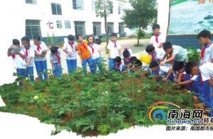 田间课堂,让梦想开花!海南许多中小学校开设特色劳动课程